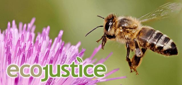 Ecojustice bee
