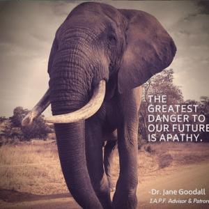 international anti-poaching foundation